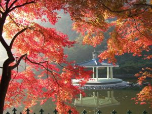 foliage giappone in autunno detto anche koyo