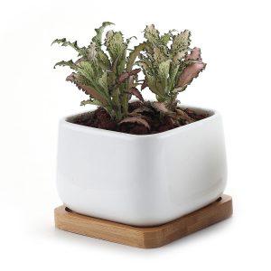 sottovaso in ceramica per piante grasse da appartamento