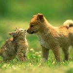 Geranio edera e geranio parigino consigli coltivazione e for Piante velenose per i gatti