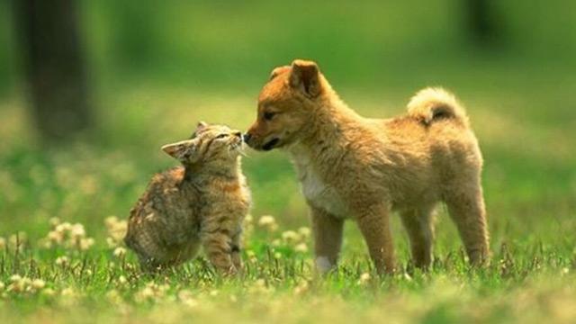 10-piante-velenose-per-cani-e-gatti