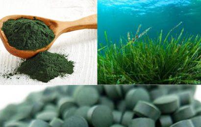 alga spirulina proprietà e controindicazioni