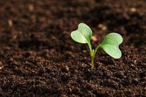 agricoltura biologica in crescita in Europa