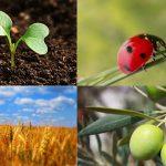 Agricoltura: in Europa cresce il biologico