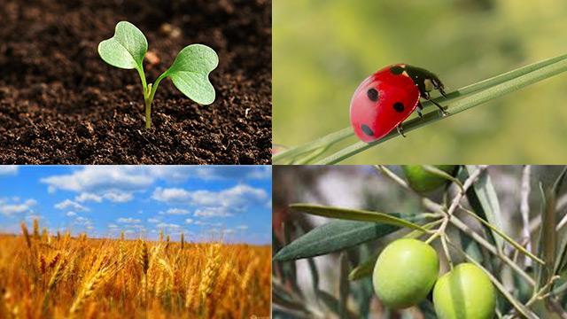 agricoltura-biologica-in-crescita-in-europa