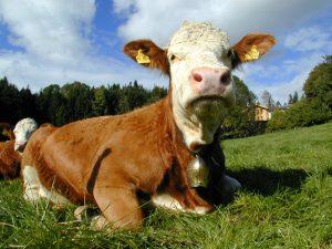 produzione animale agricoltura biologica