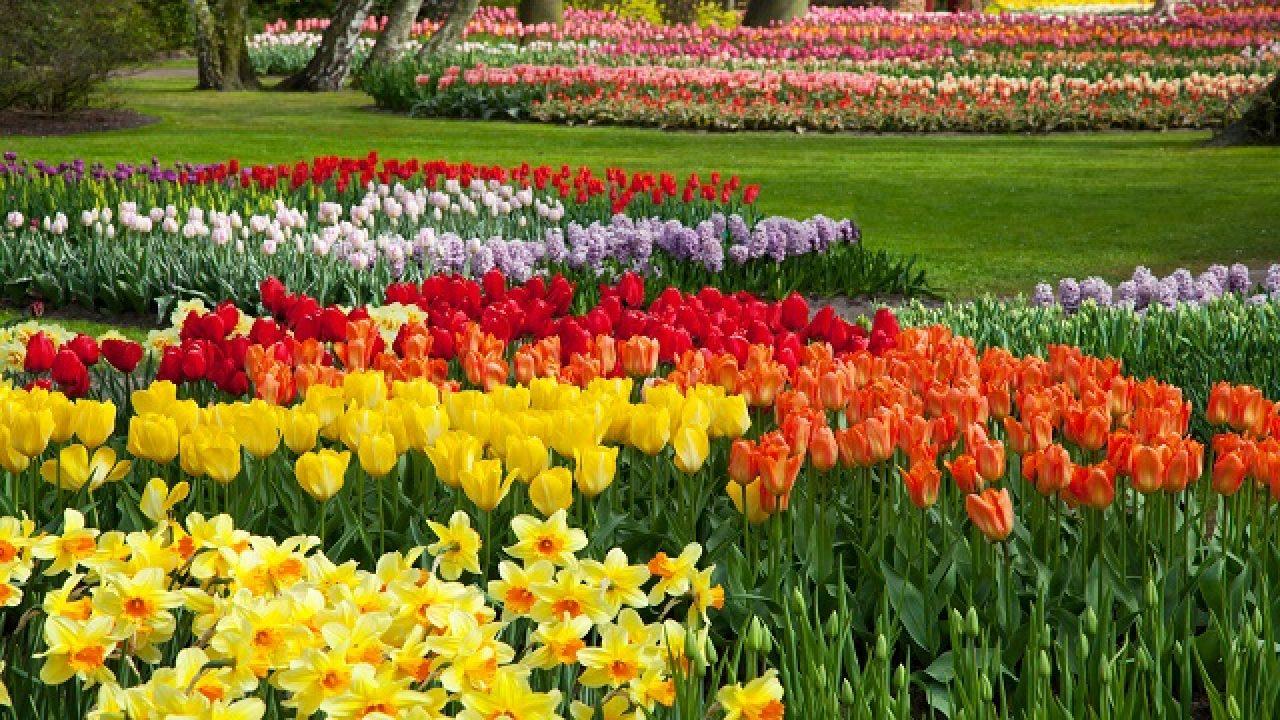 Piante Piccole Da Giardino 10 piante da aiuola che fioriscono in primavera