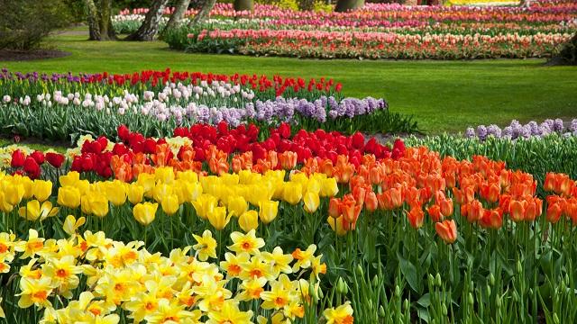 10 piante da aiuola che fioriscono in primavera for Piante da aiuola