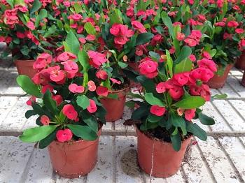 10 piante grasse da appartamento quali scegliere e come for Piante e fiori da appartamento