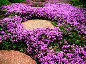 10 piante da aiuola che fioriscono in primavera for Piante da giardino perenni fiorite