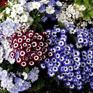 10 piante da aiuola che fioriscono in primavera for Aiuole fiorite immagini