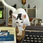 La casa dei gatti di Ernest Hemingway