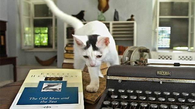 casa dei gatti
