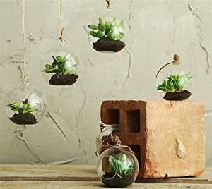 mini piante grasse da appartamento in bolla di vetro