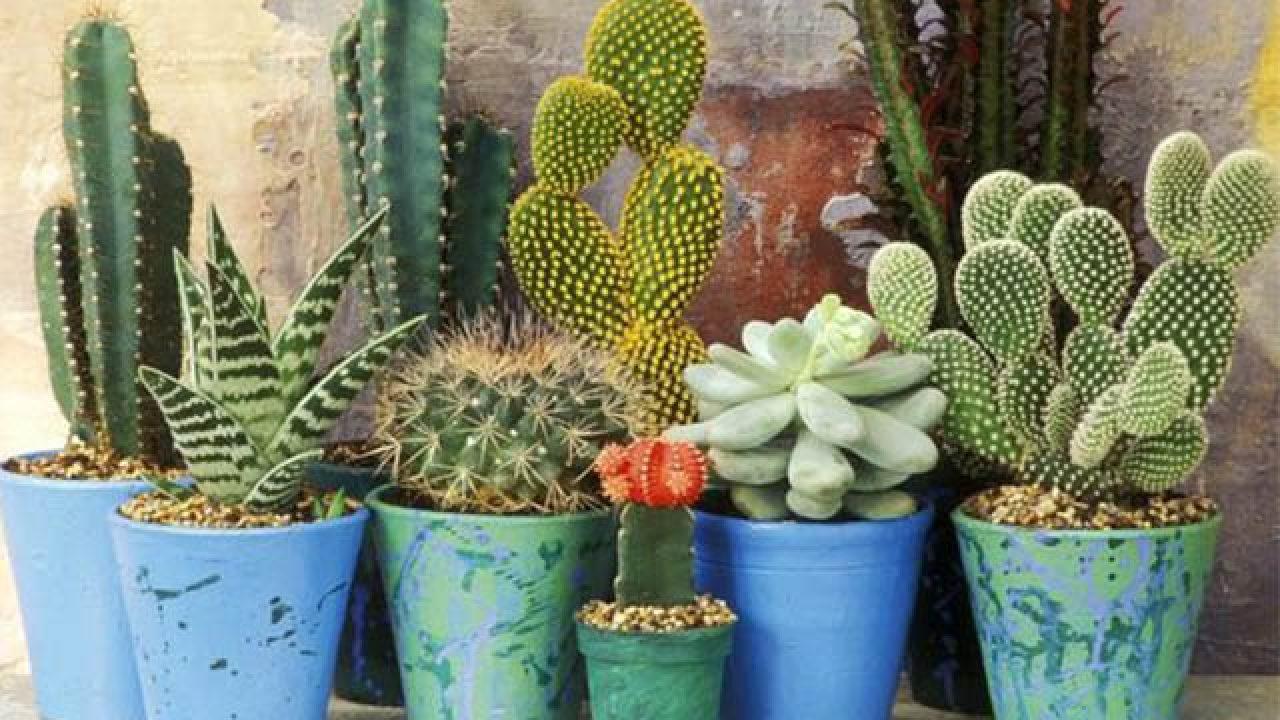 Piante Da Regalare A Pasqua 10 piante grasse da appartamento: quali scegliere e come curarle