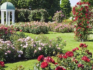 10 Piante Da Aiuola Che Fioriscono In Primavera