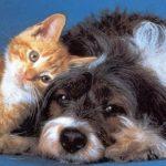 Cremazione animali: se ami il tuo cane o il tuo gatto, fagli l'ultimo regalo