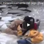 We love animals: cane salvato miracolosamente dal suo padrone!