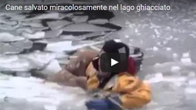 un cane viene salvato miracolosamente dal suo padrone