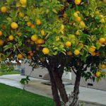 10 alberi da frutto da coltivare nell'orto, in giardino o sul balcone