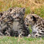 Oggi è il World Wildlife Day: la giornata mondiale della natura