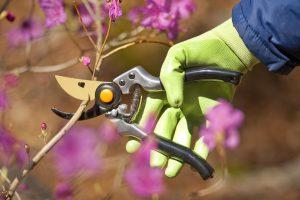 potatura alberi da frutto primavera
