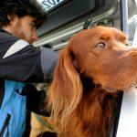 Pet Detective: come ritrovare il vostro cane o gatto smarrito