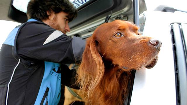 pet detective ritrovare cani e gatti
