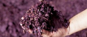 vinaccia pelle vegetale