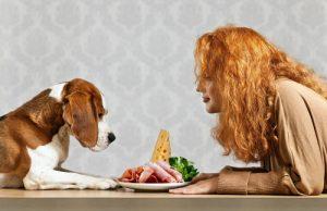 alimentazione cane casalinga consigli