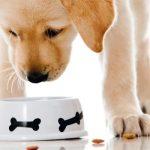 Alimentazione cane: guida a una dieta sana e equilibrata