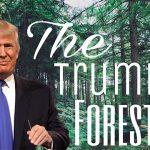 Trump Forest: piantiamo foreste in nome di Trump