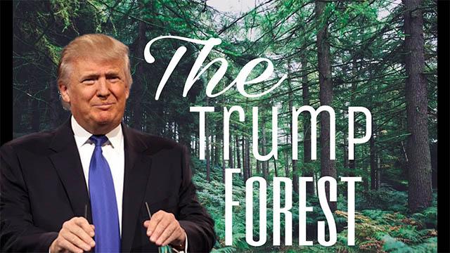progetto di riforestazione in nome di Donald Trump