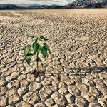 siccità: per il CNR il 2017 è stato l'anno più secco dal 1800 per l'Italia