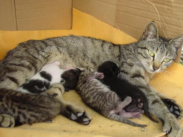 Gatta allatta i cuccioli