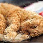 Perché i gatti fanno le fusa, come fanno e cosa significa?