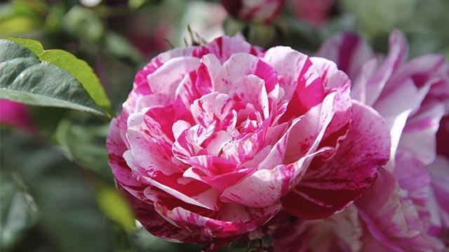 evento piante rare e particolari Flower Show