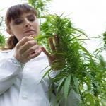 Marijuana light: produzione e commercio legali in Italia
