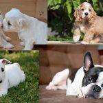 Razze di cani: le 10 migliori per chi vive in città