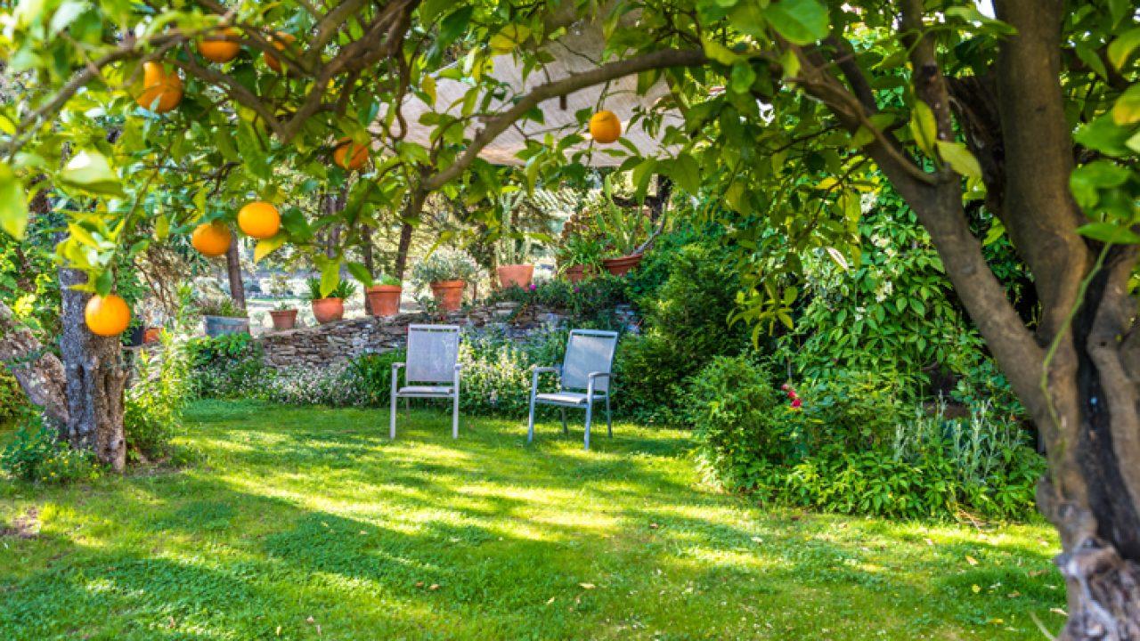 Piccoli Alberi Da Giardino alberi da frutto in giardino: quali specie scegliere per il