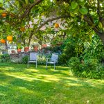 Alberi da frutto: quale scegliere per il tuo giardino e perché