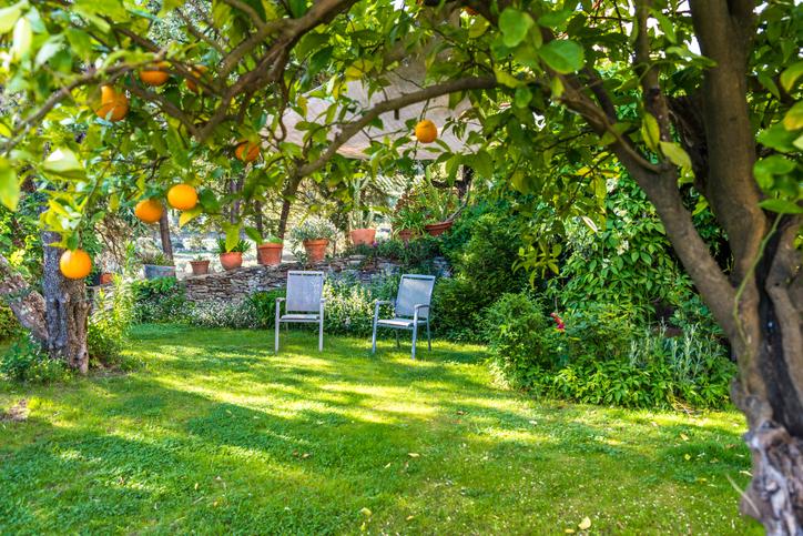 Alberi da frutto in giardino quali specie scegliere per - Alberi da piantare in giardino ...