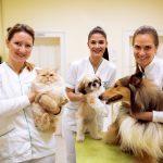 Assicurazione cane e gatto: arriva la polizza acquistabile online