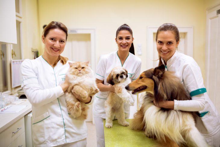 assicurazione cane e gatto sanitaria di unipol