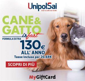 Stella Di Natale Gatti.10 Piante Velenose Per Cani E Gatti