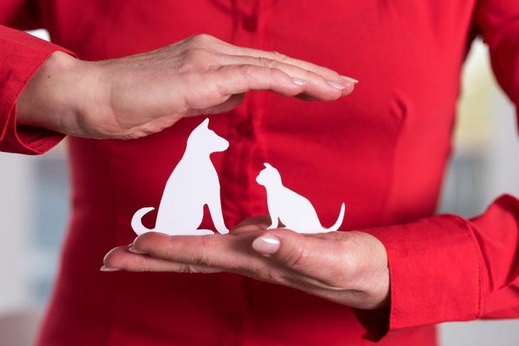 assicurazione animali a confronto quale scegliere