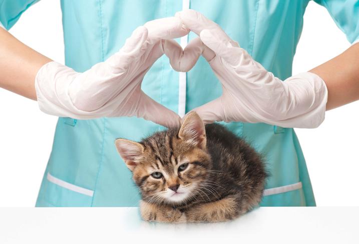 assicurazione animali a confronto quali sono le caratteristiche di ogni assicurazione