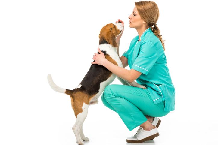 assicurazione animali a confronto quali sono le cinque migliori assicurazioni