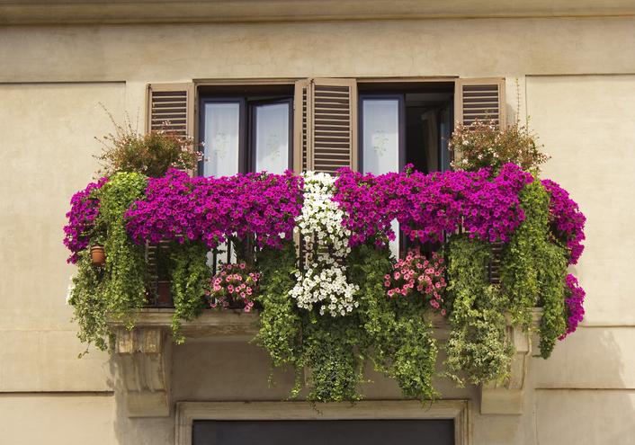piante a cascata quelle giuste per il balcone