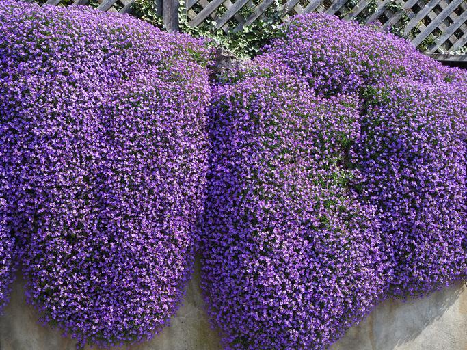 piante a cascata le soluzioni per l'esterno
