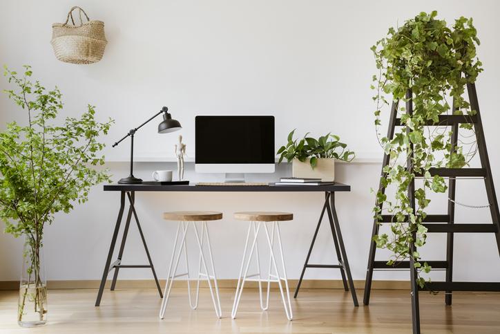 piante a cascata per ambienti interni